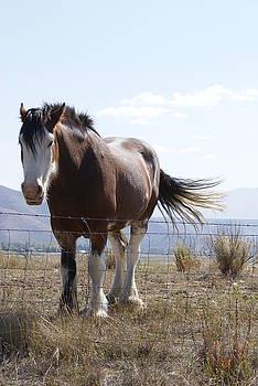 Idaho Work Horse 2 by Cynthia Powell