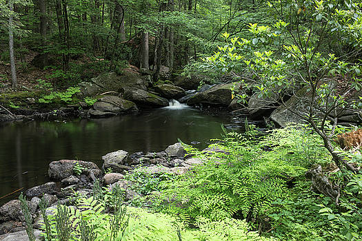 Idyllic Forest Scene in New England by New England Photographic