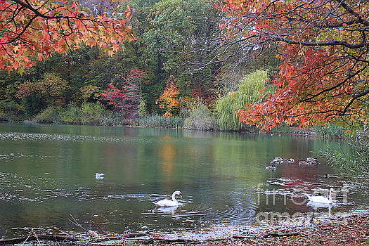 An Idyllic Autumn by Dora Sofia Caputo Photographic Design and Fine Art