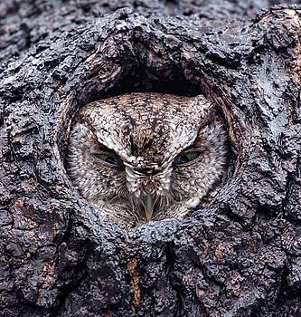 If it fits I sits by James Figielski  by Paulinskill River Photography