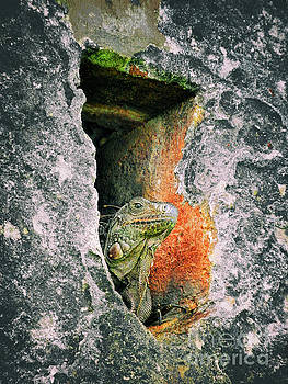 Iguana Guard by Kasia Bitner