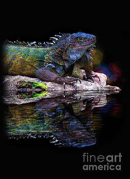 Iguana In Montanita, Ecuador III by Al Bourassa