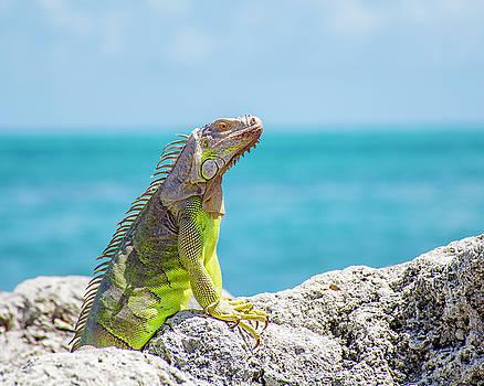 Iguana by Manuel Lopez