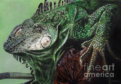 Iguana by Monica Carrell