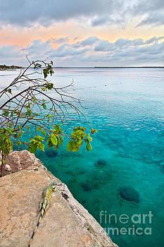 Iguana Sunset in Bonaire by Christy Woodrow