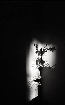 Ikebana Noir by Nick Young