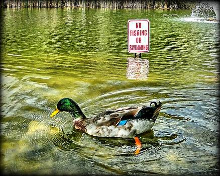 Illegal duck by Dale Paul