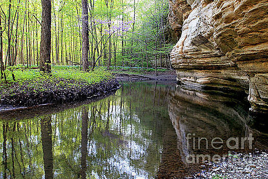 Illinois Canyon In SpringStarved Rock State Park by Paula Guttilla