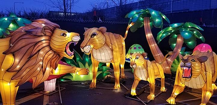 Illuminated Lion Family by Britten Adams