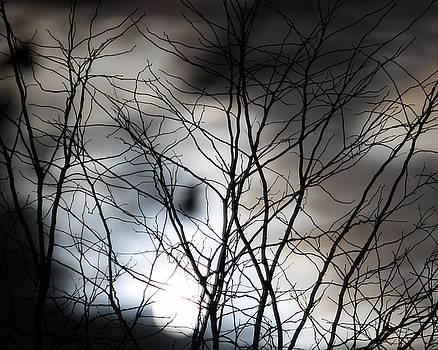 Anne Babineau - illumination
