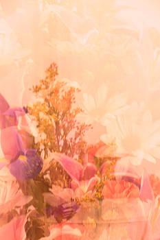 Carolyn Jacob - Illusion in Pink