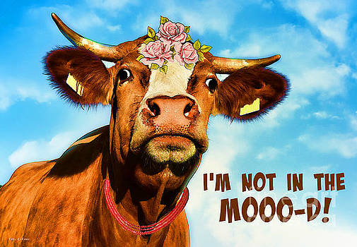 I'm Not In The Mooo-d by Tina LeCour