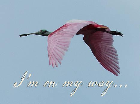 I'm On My Way by Mary Elizabeth Thompson