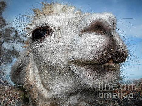 Smiling Lama by Barbara Dudzinska