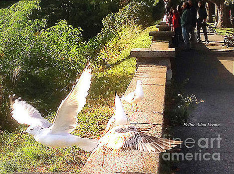 Felipe Adan Lerma - Image Included in Queen the Novel - Birds on Battery Park Wall Vermont Enhanced