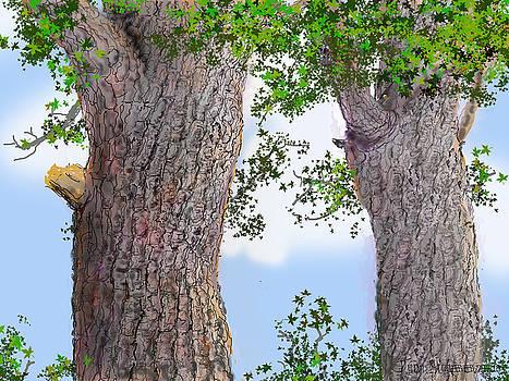 Jim Hubbard - Imaginary Trees