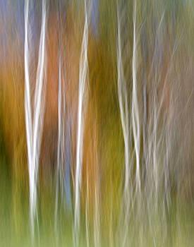 Imagine by Doug Hockman Photography