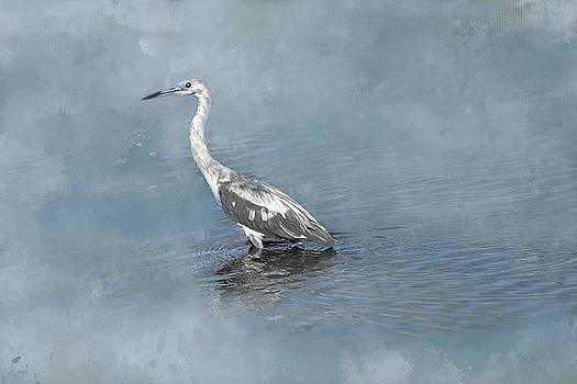 Immature Little Blue Heron by Donna Kennedy