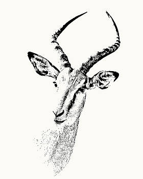 Impala Antelope Portrait by Scotch Macaskill