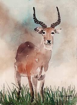 Impala by Arline Wagner