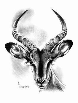 Impala by Dave Lawson