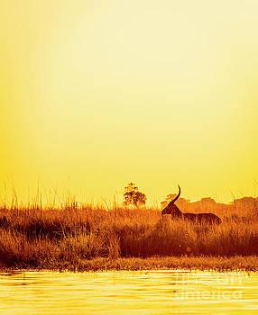 Tim Hester - Impala Vintage Sunset Silhouette