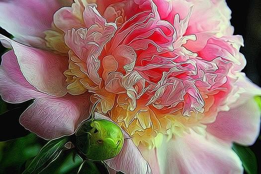 Impressionist Peony by Dana Moos