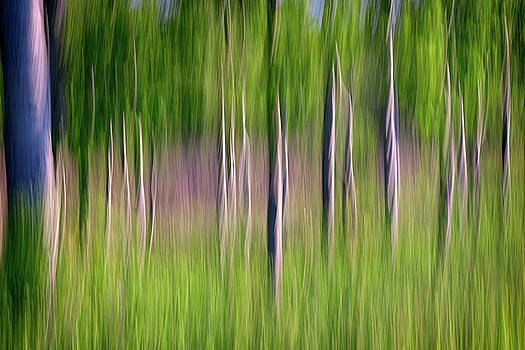 Impressionist Trees by Rick Berk