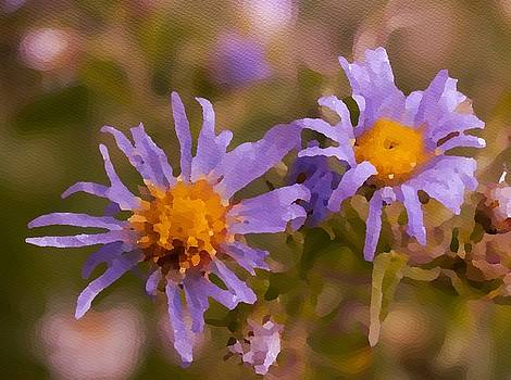 Impressionistic Asters by Kathryn Whitaker