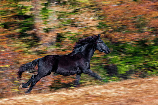 Impressionistic Friesian by Eric Albright