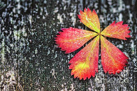 Impressions of Autumn by Evelina Kremsdorf