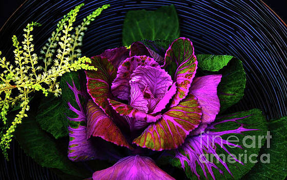 In A Basket by Diana Mary Sharpton