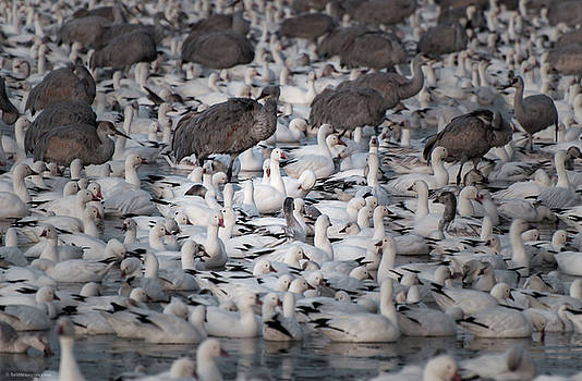 In a Crowd - The Bosque by Britt Runyon