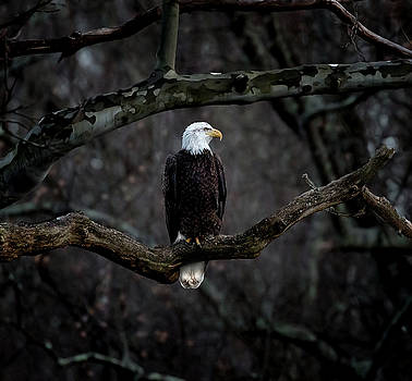 In a Mood by James Figielski by Paulinskill River Photography