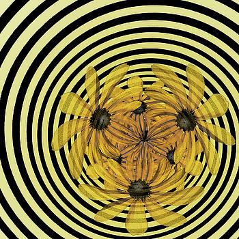 Nikolyn McDonald - In a Whirl