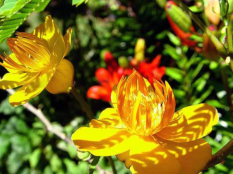 In Bloom by Su Ferguson - Don Burkheimer