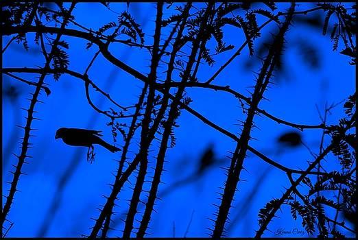 In Flight at Night by Kimmi Craig