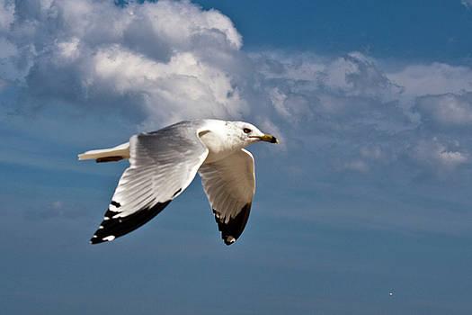 Donna Walsh - In Flight
