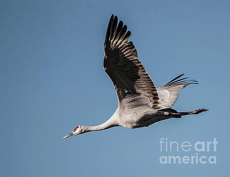 In Flight by John Greco