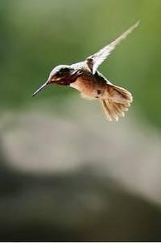In Flight by Misty Alger