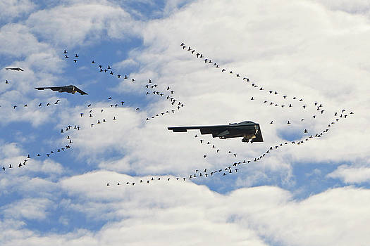 In Formation by Christopher McKenzie