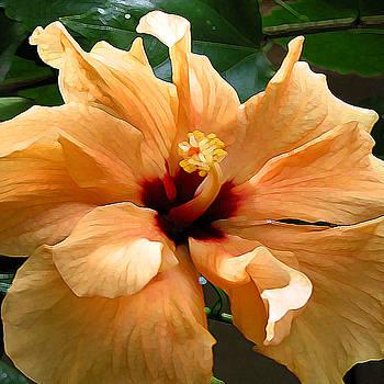 In Full Bloom by Diane Ellingham