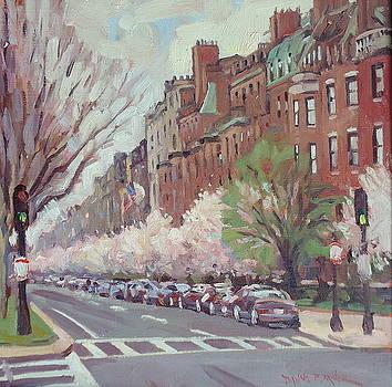 In Full Bloom by Dianne Panarelli Miller