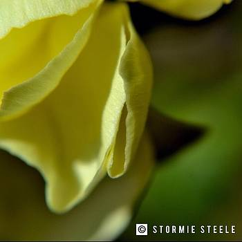 In His Presence by Stormie Steele