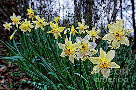 In Line For Spring by Paul Mashburn
