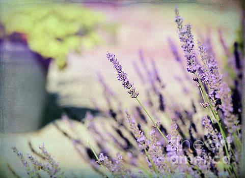 In Love with Lavender by Kerri Farley