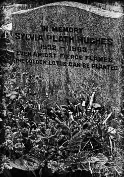 In memory of Sylvia by Sandra Pledger