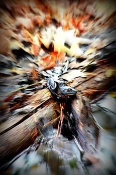 In Motion by Skyler Obrien