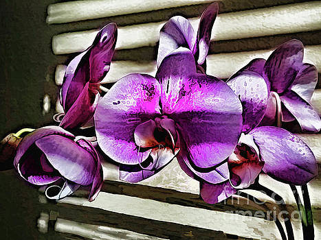 In Muted Dusk by Diana Mary Sharpton