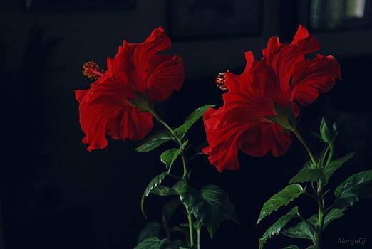 In pair by Marija Djedovic